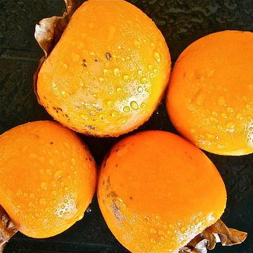 渋柿を甘くする方法は!これを見たら簡単につくれるようになった。
