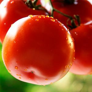 トマトのリコピンを摂るとこんな効果があった!リコピンまとめ